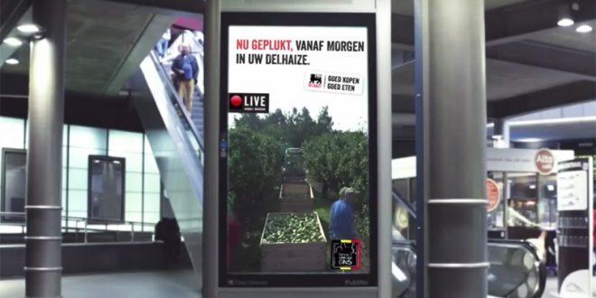 Un supermarché diffuse en live la récolte de ses fruits